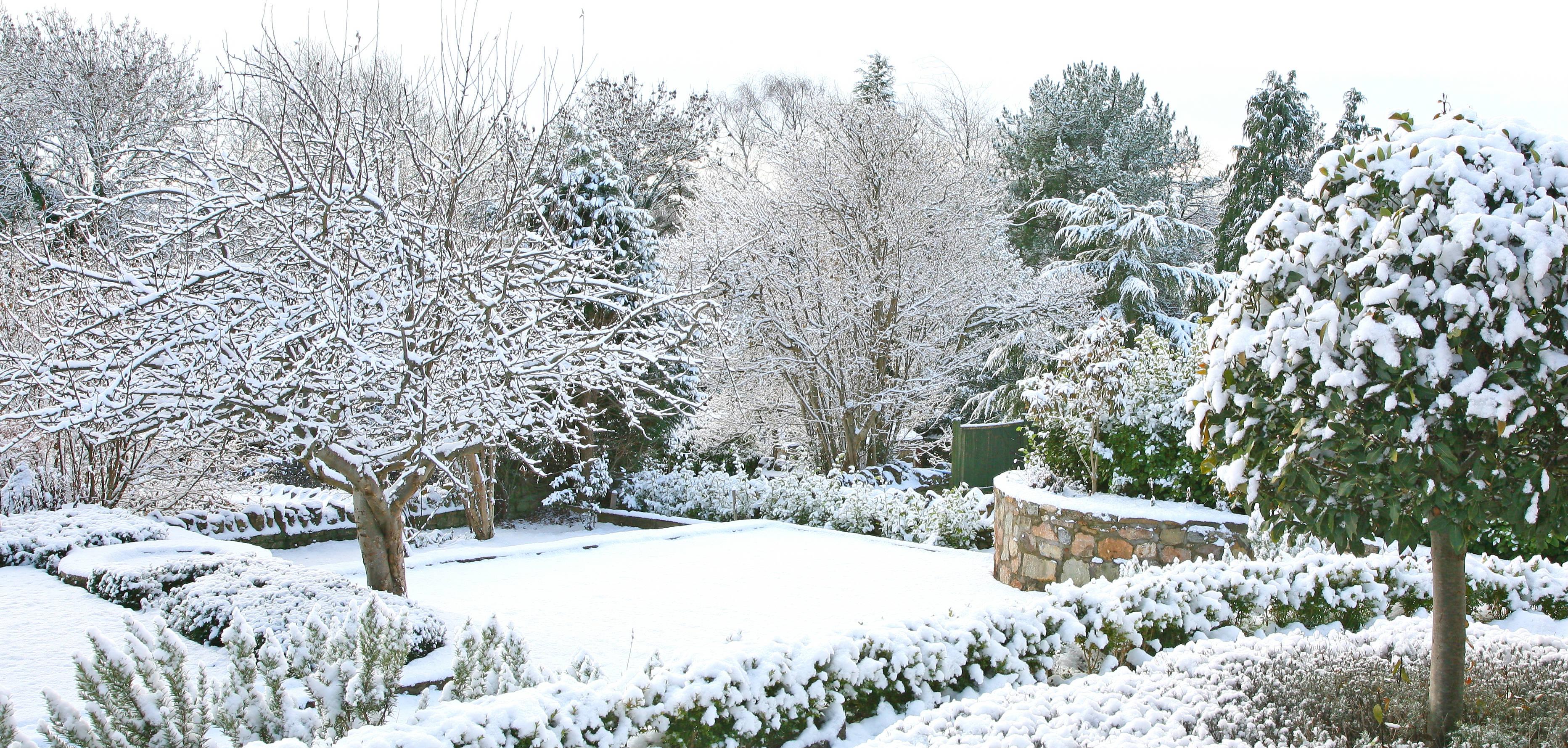 Vinterhave tilaekket af sne
